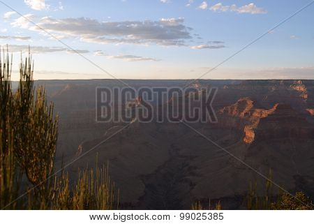 View of the Grand Canyon with Desert Bushes in Foreground