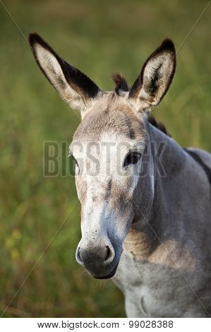 cute donkey portrait