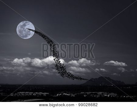 Bats, Full Moon And Mountains