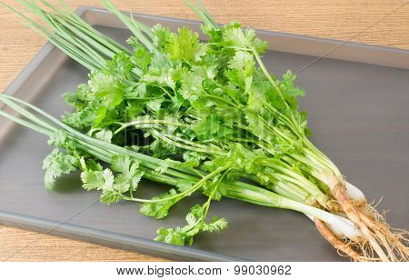 Fresh Green Coriander And Scallion On Grey Tray