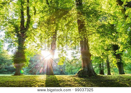 Green Forest Treetop With Sunrays Vertical