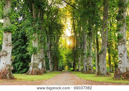 Green Forest Pathway With Beautiful Sunrays Coming Through
