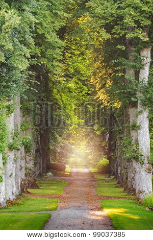 Straight Forest Pathway With Beautiful Sunrays And  Mist And Fog