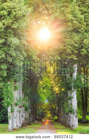 Straight Forest Pathway With Beautiful Sunrays