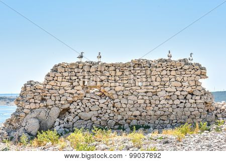 Seagulls Are Standing On The Stone Wall