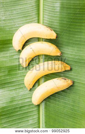 Banana On Green Banana Leaf
