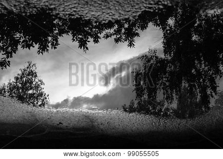 Trees In Rain Water Puddle Reflection