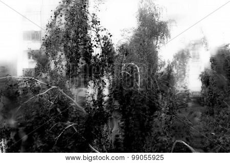 Water Drops On Glass Window With Trees In Background