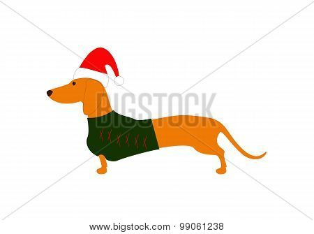 Dachshund In Christmas Hat And Jersey