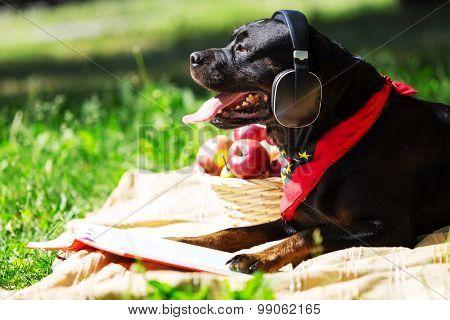 Cute dog in summer park wearing headphones