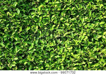 Fresh Tropical Green Leaves Wall Background