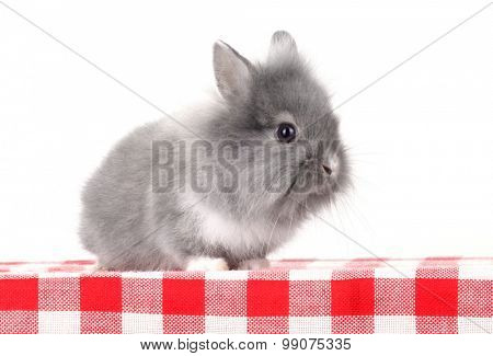 Gray rabbit bunny baby isolated on table
