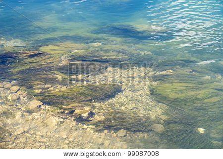 Photos algae on bottom of a lake