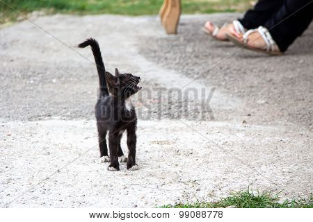 Photo black stray meowing kitten