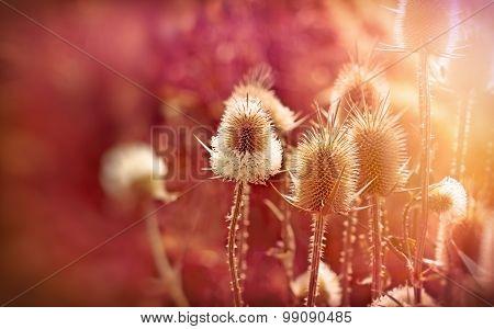 Burdock-Velcro (beautiful nature)