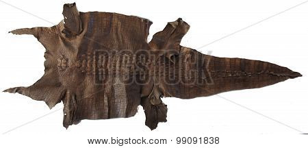 The skin of a huge saltwater crocodile on the wall. Philippines. The island of Palawan.