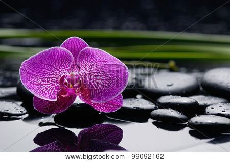 Set of orchid with therapy stones