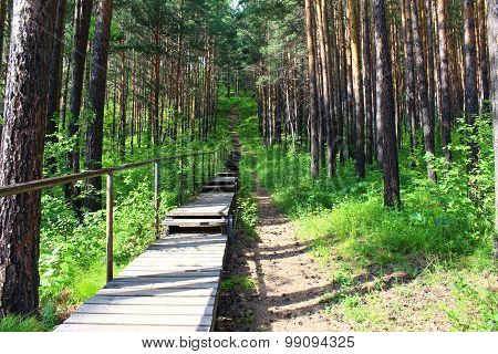 A wooden staircase in the forest stretches up