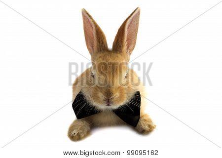 Mustachioed Rabbit Bow Tie.