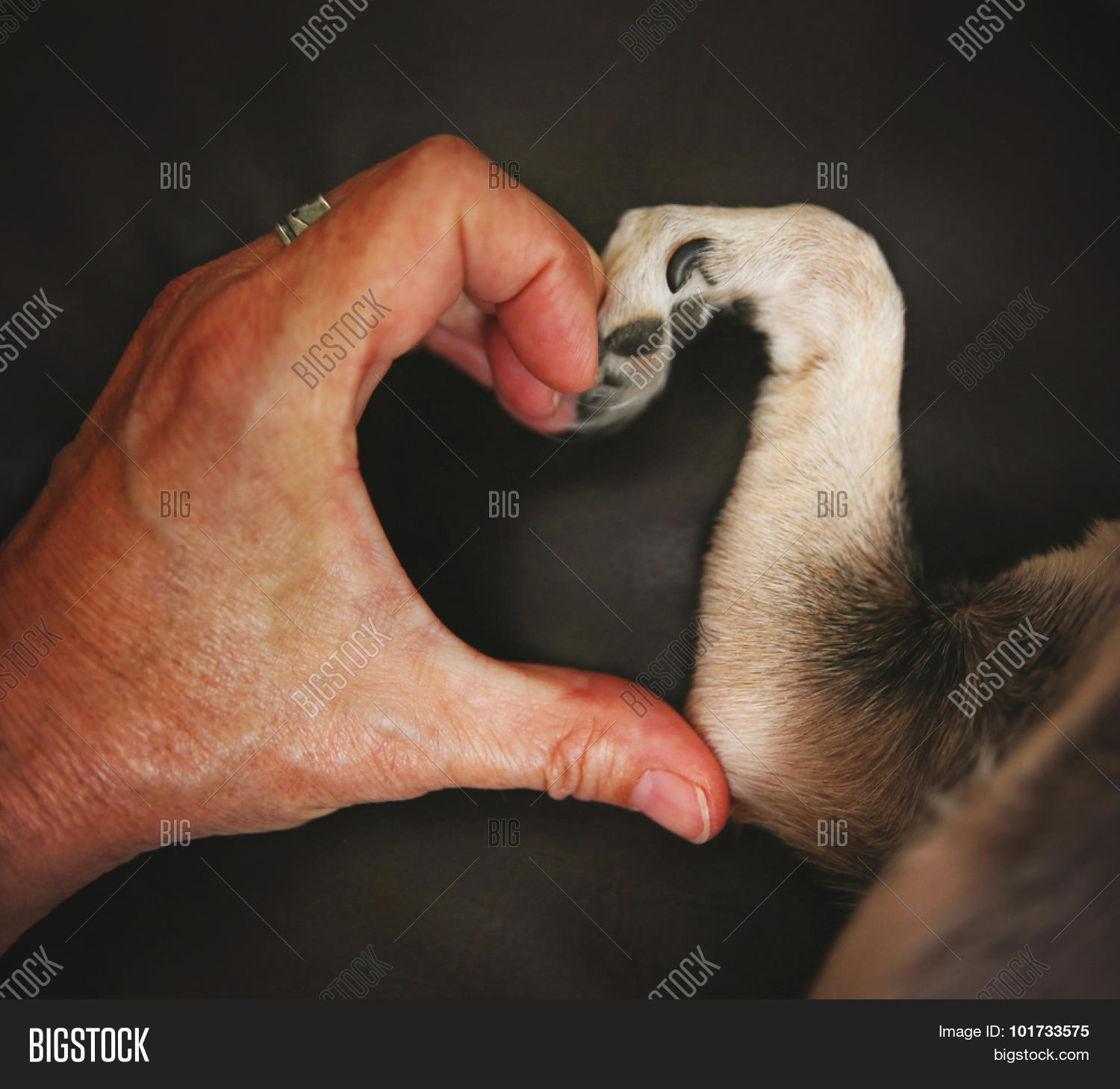 Dog Paw And Hand Making Heart Shape