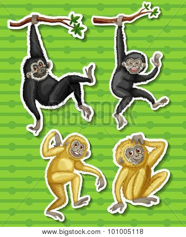 Gibbons in four different poses illustration