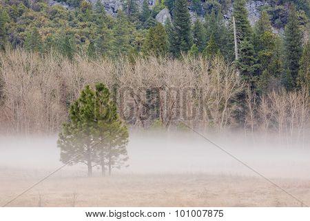 Morning Haze At Yosemite National Park, California, Usa