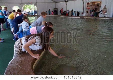 Petting Cownose Rays