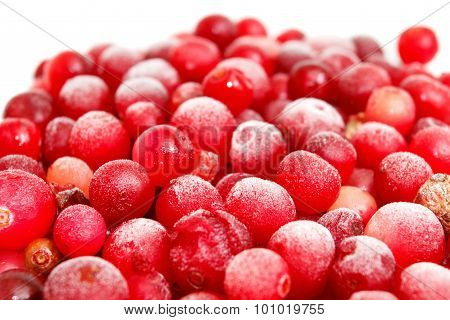 Macro Shot Of A Frozen Red Currant
