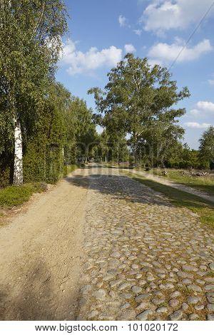Luneburg Heath - Roadway With Cobblestone In The Landscape