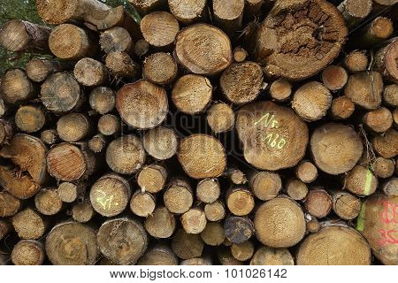 Luneburg Heath - Pile Of Tree Trunks