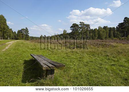 Luneburg Heath - Landscape