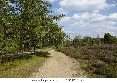 Luneburg Heath - Hike Path