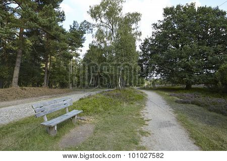 Luneburg Heath - Hike Path With Bench