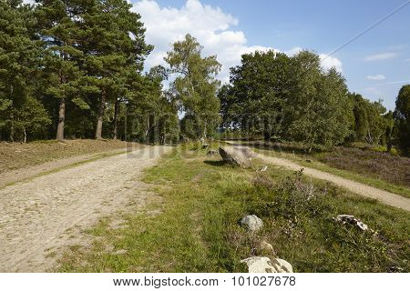 Luneburg Heath - Track Through The Heathland Near Egestorf