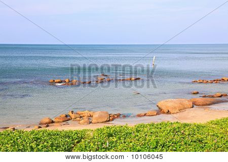 landscape of beach grass Ipomoea pes-caprae Sweet with rock and ripple in Rayong beach Thailand.