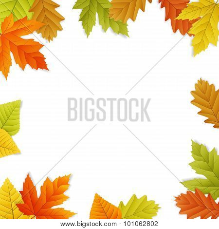 Fall Vector Leaf Border