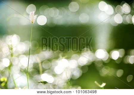 04 -  Flowers on the grass with natural bokeh
