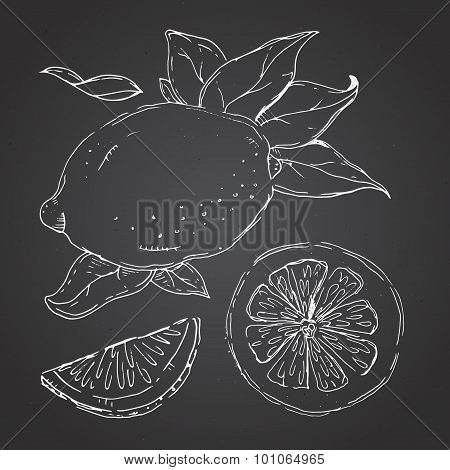 The drawn set of lemons. Lemon segments, juicy lemon. Dark backg