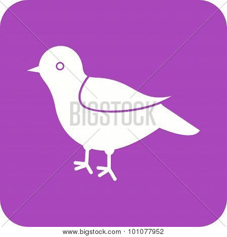 Bird , Animal