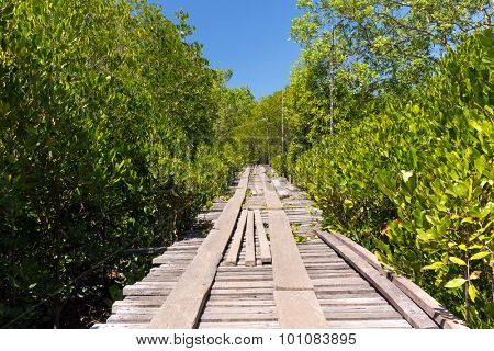 Mangrove tree area in the Ko Lanta island, Thailand