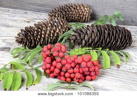 Red Rowan With Pinecones On Wooden Table