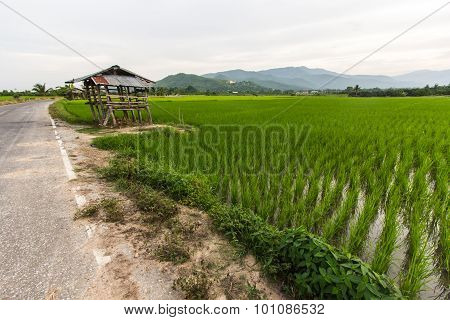 Old Cottage In The Rice Fields With Thai Temple On Mountain