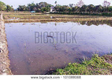 Architecture Farming In Asia Rice Field