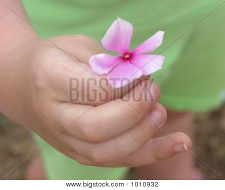 Child Holding Flower Petal F