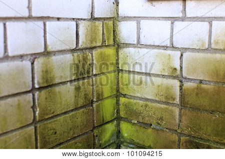 green mold in the corner of a brick wall