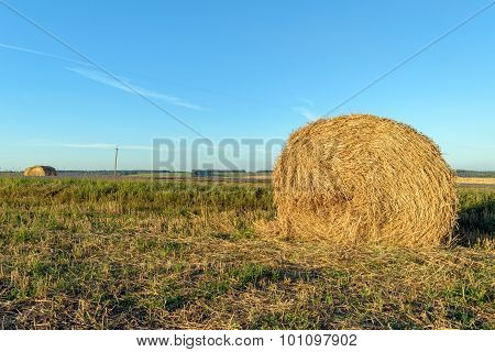 Field With Round Bales After Harvest