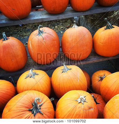 Orange Pumpkins At The Marketplace