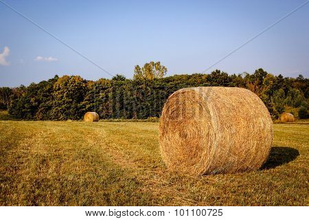 hay bales in Kentucky field