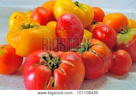 Overripe Red Tomatoes