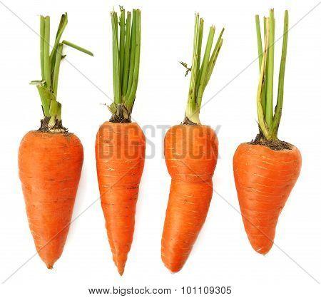 Four Raw Whole Organic Imperfect Orange Carrots Isolated